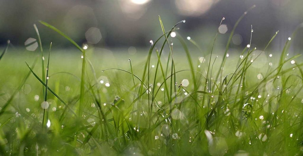 lang nat groen gras