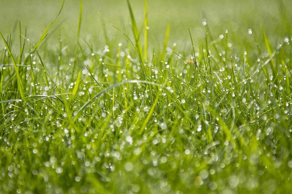 nat lang groen gras