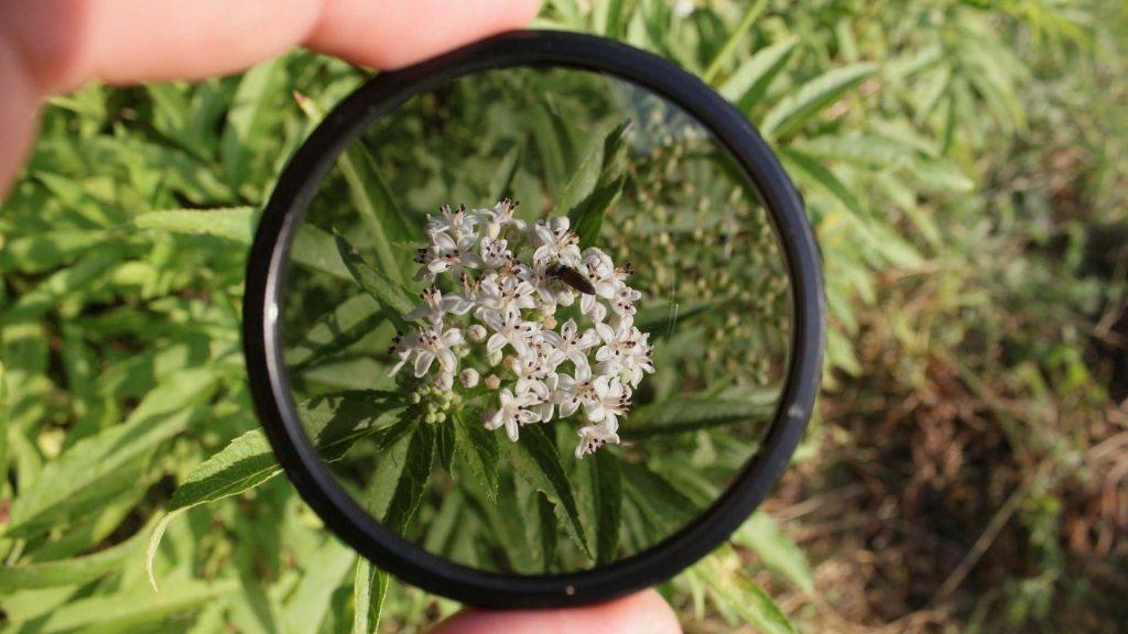 ND-filter drone bloemen natuur
