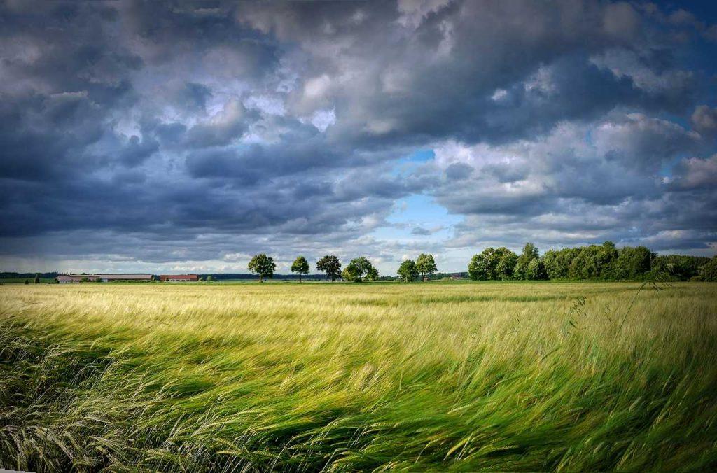 Wind bewolkt landschap gras