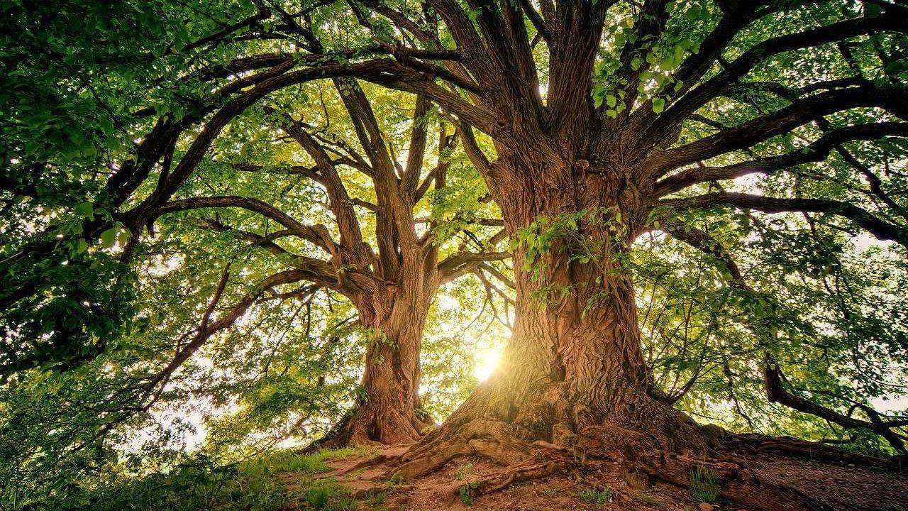 bomen bos zon bladeren