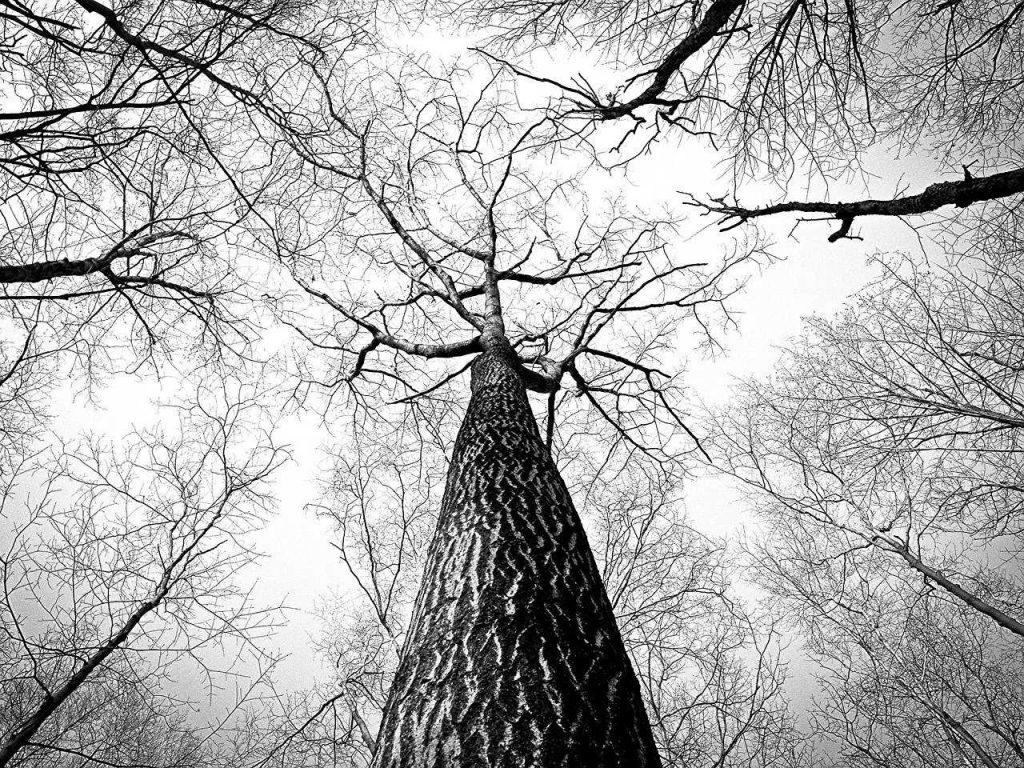 Hoe haal je een drone uit de boom?