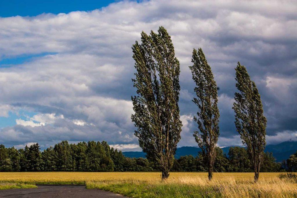 bomen windrichting platteland landschap natuur