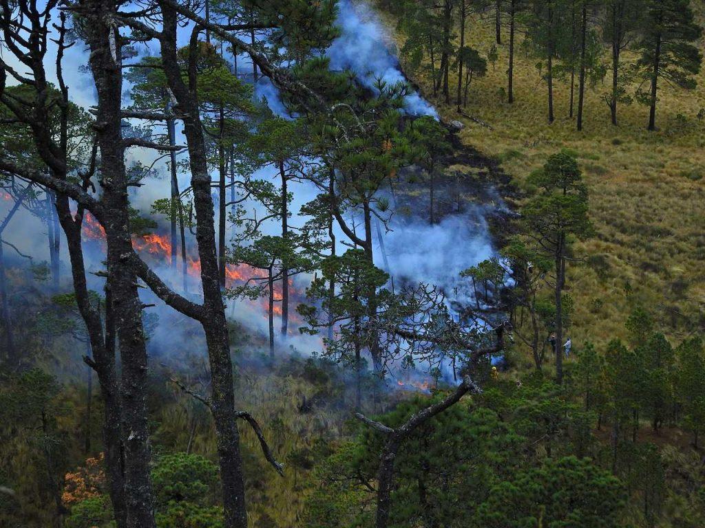 bosbrand bos brand dennenbos luchtfoto drone
