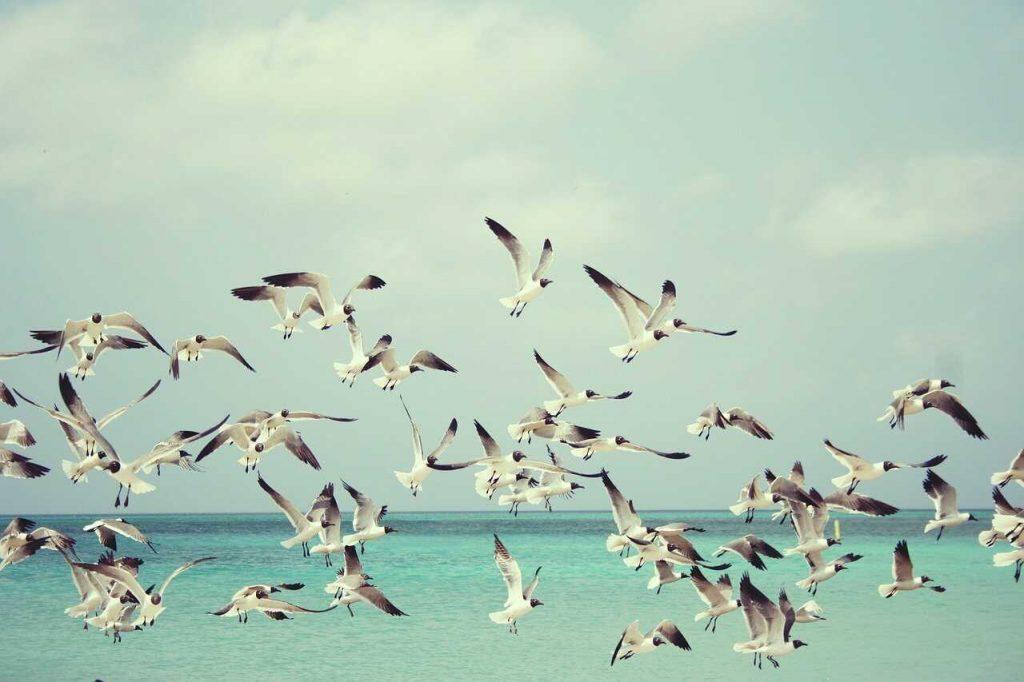 meeuwen vogels groep vliegen strand