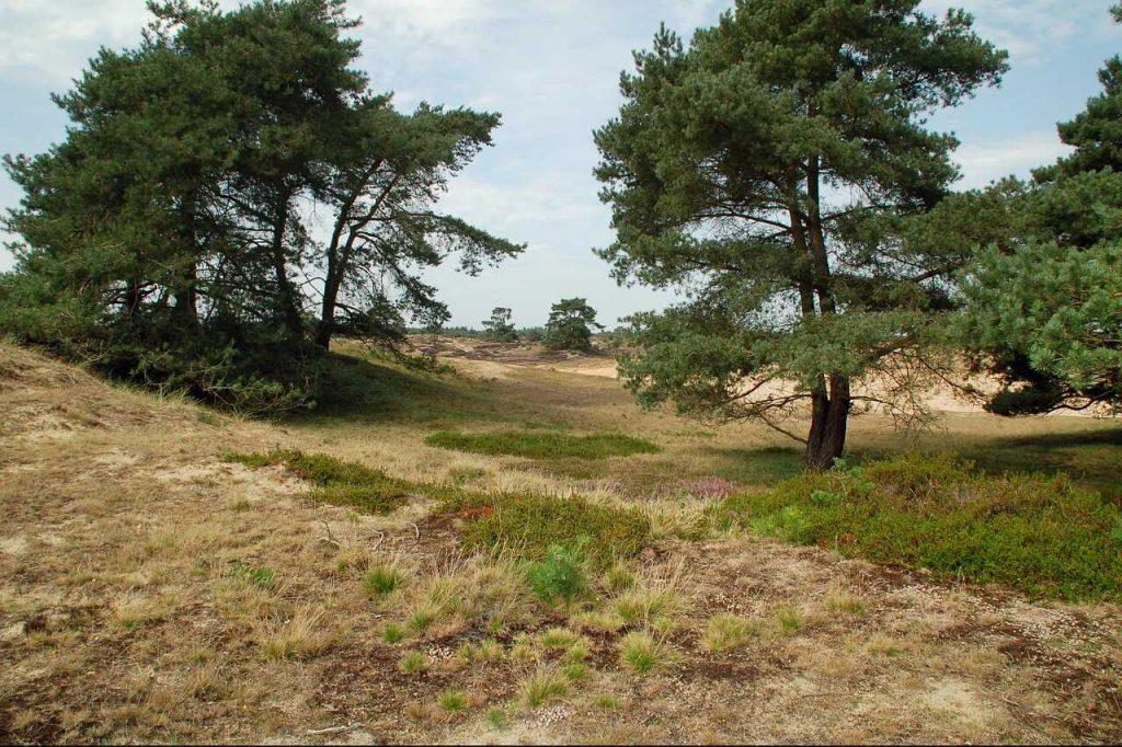 Drents-Friese Wold natuur landschap