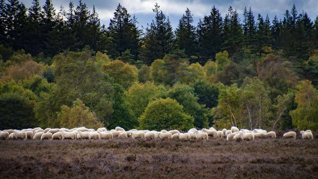 Veluwe Nederland beschermde natuur Natura 2000-gebied