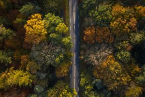 weg in de herfst optimized 1