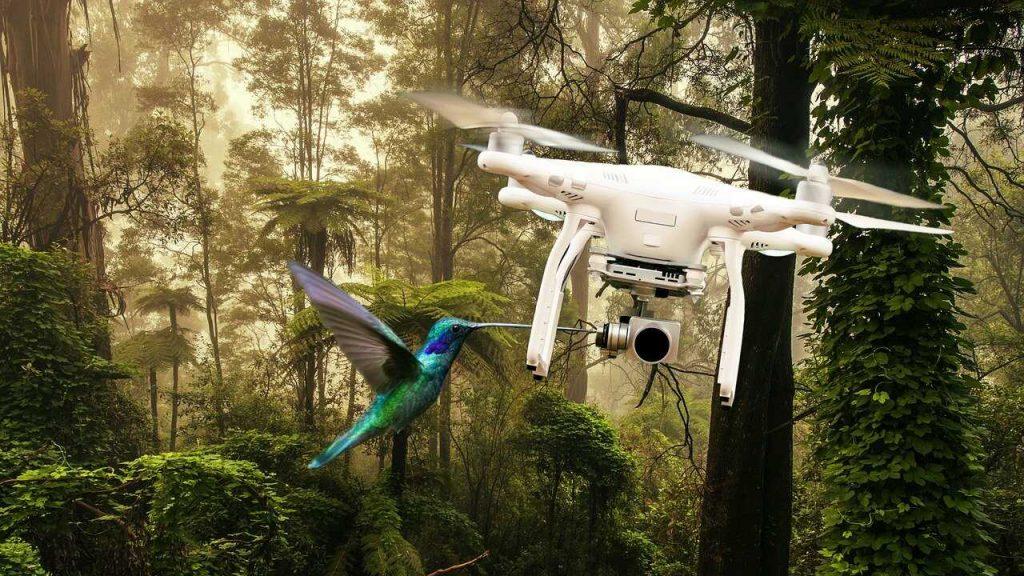 drone om vogel weg te jagen