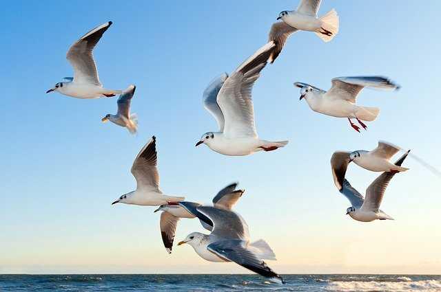 meeuwen strand vliegen blauwe lucht