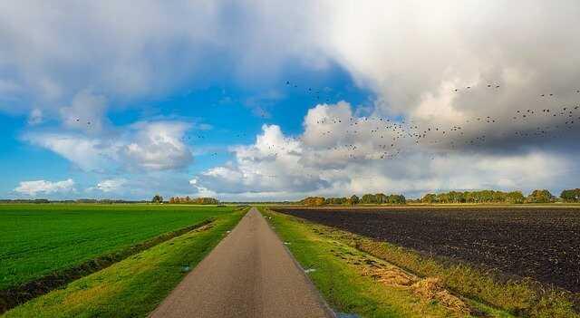 vogels land wegjagen nederland met drone